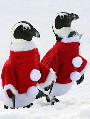 qq2008企鹅头像