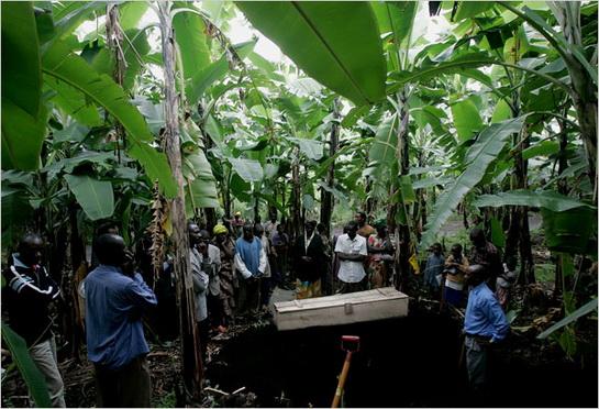 女被埋在香蕉树下