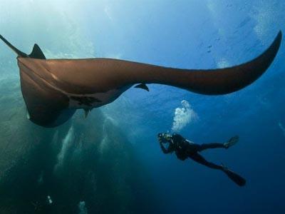 2010海洋摄影佳作——动物篇(3)