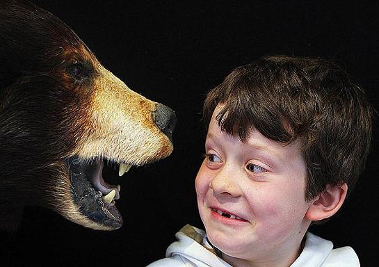 都柏林的濒危动物展览馆