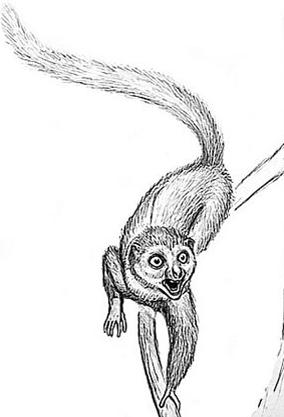 猿和其他灵长类动物的共同祖先